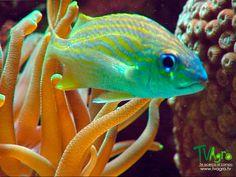 Universo animal: Especies marinas.