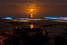 Bioluminescent tide (red tide) at La Jolla Cove glows under a crescent moon.