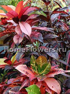 Молодые листья часто отличаются по цвету от взрослых