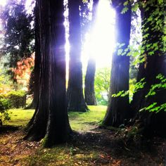 Portland - The Grotto