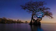 Hammock camping in an old growth Cypress tree, Florida (© Mac Stone/Tandem Stills + Motion)