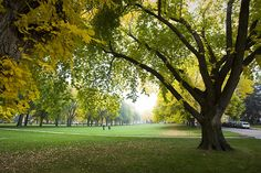 will miss the fall colors at the CSU oval this year. @Katie Mitchell will need to take a pic for me.