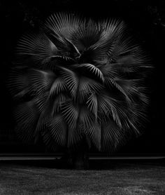 ART WORK: PHOTOGRAPHY - Geert Goiris (Polar + Geert Goiris — CCS,Centre culturel Suisse — Evénement — Slash Paris)
