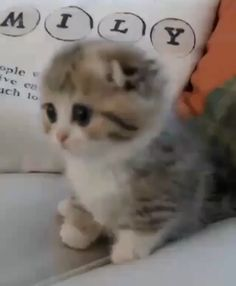 And Cute Kittens Funny And Cute Kittens ? Credit: [Thank you very much!] - Click Visit To Watch More VideosFunny And Cute Kittens ? Credit: [Thank you very much!] - Click Visit To Watch More Videos Baby Animals Super Cute, Cute Baby Cats, Cute Little Animals, Cute Cats And Kittens, Adorable Kittens, Cats In Hats, Ragdoll Kittens, Burmese Kittens, Black Kittens