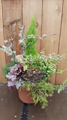 A planted design of Fall and Winter plants will be a highlight at your front door or yard when all the other plants are done in the garden. You will love to have something beautiful to look at with th