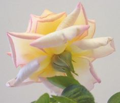 Roses | ARTchat - Porcelain Art Plus (formerly Chatty Teachers & Artists)