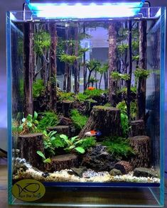 Aquarium Garden, Aquarium Landscape, Betta Fish Tank, Nature Aquarium, Aquarium Fish Tank, Fish Tank Terrarium, Aquarium Terrarium, Cool Fish Tanks, Amazing Fish Tanks