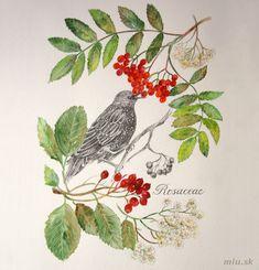 Rosaceae - Jarabina vtáčia a Jarabina mukyňová (čeľaď Rosaceae) – miu.sk