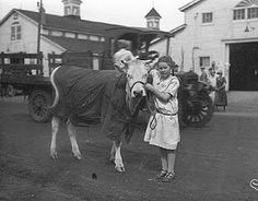 Showing animals at the fair, 1920's.