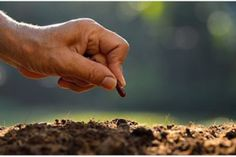 Planting by Farmer¡¯s hand planting a seed in soil Earth Day Facts, Reap What You Sow, Homestead Gardens, Planting Seeds, Botany, Gardening Tips, Homesteading, Farmer, Cannabis