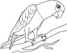 ausmalbilder malvorlagen   vogel malvorlagen, ausmalbilder, malvorlagen tiere