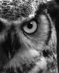 My collection of owl gifs; cute, majestic, and... owly - Imgur