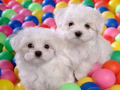 cachorrinhos fofos - Pesquisa Google