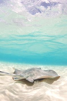my dream- I just want to be a hands-on marine biologist. I wanna collect samples, observe organisms in the ocean, help endangered species, help with cleaning up beaches.. I wanna travel to all of the crystal clear beaches where underwater life is colorful and lively.
