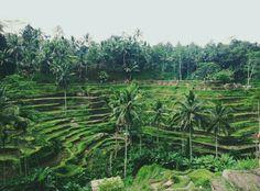 The #1st Bali Local Guide - YukmariGO  yukmarigo.com/partner/profile/b65d39f1-cef2-49da-a54d-b372f42dc431    #bali #bylocals #privatetours #ubud #riceterrace