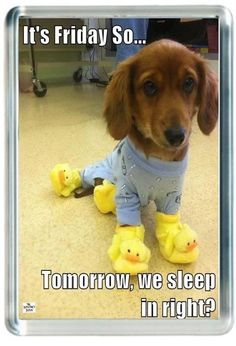 Week End Friday Tomorrow Sleep In Funny Slipper Dog Quote Saying Gift Present No #ebay #Home & Garden