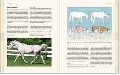 knabstrupper horse coat colors - Buscar con Google