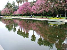 Jacarandás do Parque Farroupilha (Redenção) (photo by Deni Baptista). Parque Farroupilha. Também conhecido como Parque da Redenção.  Com área de 370.000 m². Site: http://www.portoalegre.tur.br/ponto_turistico/parque_farroupilha_redencao-porto_alegre-21-2-16-48.html