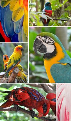 """Tropical Birds  * images via: """"Macaw Wing Feathers"""" by PuppiesAreProzac, """"lattice-tailed trogon"""" by Matt MacGillvray, """"Jurong Bird Park, Singapore"""" by Michael Gwyther-Jones, """"Flamingo Feathers I"""" by Holly Kuchera, """"Untitled"""" by Michael Gwyther-Jones, """"Untitled"""" by Michael Gwyther-Jones"""