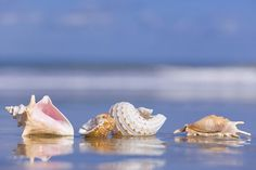 """Head for the Beach""    Women's Retreat Registration Deadline   March 16~Call church office     Sea shells"