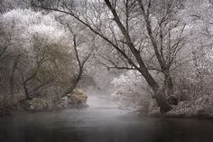 Patrick Hübschmann:雾冰藜 - 新摄影