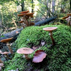 pilze-im-Wald-mushrooms-in-the-forest