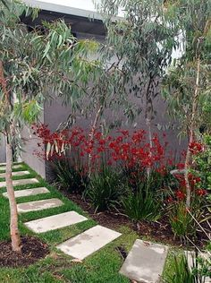 I mainly like this pin for the the rendered grey wall and native garden Coastal Gardens, Beach Gardens, Small Gardens, Outdoor Gardens, Australian Garden Design, Australian Native Garden, Australian Plants, Backyard Garden Design, Garden Landscape Design