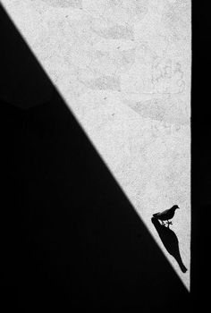 Bird Shadow and Henri Cartier Bresson Black N White, Black White Photos, Black And White Photography, White Art, Candid Photography, Fine Art Photography, Street Photography, Urban Photography, Chiaroscuro Photography