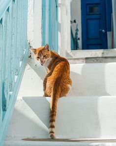 Mykonos by Eetu Ahanen Mykonos, Cities, Travel, Animals, Viajes, Animales, Animaux, Trips, Animal Memes