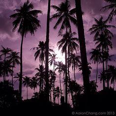 Tahitian Moon Rise