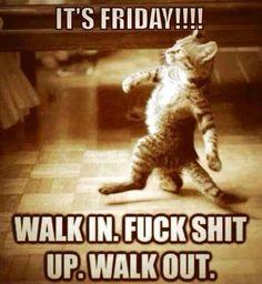 .Friday #meme #cat