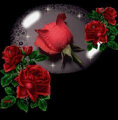أحببت الورود الحمراء bbff0f47e2061a472b56