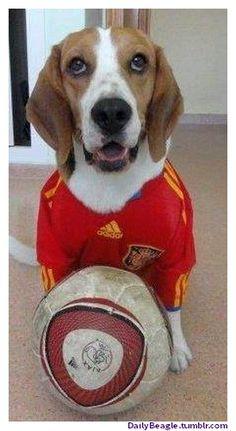 A Photo of Cute Beagle