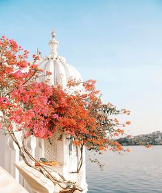 Pretty florals at Taj Lake Palace – Udaipur, India Oh The Places You'll Go, Places To Travel, Travel Destinations, Beautiful World, Beautiful Places, Udaipur India, India Palace, Jaipur, Backpacking India