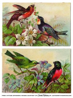 vintage birds, children, stamps and artist palettes Images Vintage, Vintage Tags, Vintage Ephemera, Vintage Pictures, Vintage Postcards, Vintage Prints, Nature Prints, Bird Prints, Munier