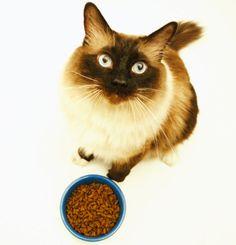 Alimentazione dei gatti: le crocchette sono dannose?