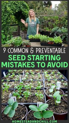 9 Common Seed Starting Mistakes To Avoid ~ Homestead and Chill