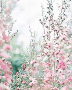 New flowers spring photography bloemen ideas Frühling Wallpaper, Nature Wallpaper, Pink Flower Wallpaper, Pink Flowers, Beautiful Flowers, Wax Flowers, Spring Photography, Photography Flowers, Deco Floral