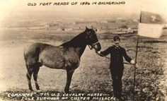 Comanche - Cavalry horse was the lone survivor of the Battle of Little Big Horn 1776 Us History, American History, American Indian Wars, American Indians, George Custer, George Armstrong, Gettysburg Battlefield, Old Fort, Show Horses