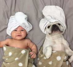 When you have a child and a puppy, you actually have two babies to pamper. www.bullymake.com via: @_zoethefrenchie_