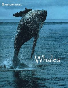 Whales: Elective Unit Study by Intellego $18.95