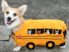 What's golden-yellow, longer than it is tall, and gives a super-smooth ride? The Corgi Bus!   Banjo the cute Pembroke Welsh Corgi, in Halloween costume, via Corgi Addict
