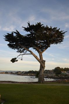 Lover's Point, Pacific Grove (Monterey, CA). I had a picnic date here and I'll never forget how beautiful the view was.