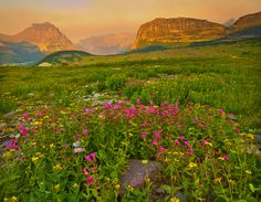https://flic.kr/p/9GyvRD | Wildflowers in Glacier National Park, Montana | This is an image from a trip to Glacier National Park from a few years ago. I was just reprocessing some older images and came across this and thought what the heck….