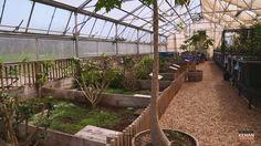 Reptile Zoo, Reptile Cage, Tortoise Enclosure, Reptile Enclosure, Tortoise Table, Animal Habitats, Pet Cage, Vivarium, Flash Photography