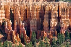 Saw some hoodoos - vivid colors, stunning formations at Bryce Canyon National Park, Utah.  ----  A hoodoo (is a tall thin spire of rock)  composed of soft sedimentary rock and topped by a piece of harder, less easily-eroded stone that protects the column from the elements.