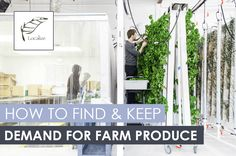 Starting a farm is tough, esp. when it comes to finding & scaling the demand for farm produce. Here are 3 lessons from a farmer who overcame that challenge. Vertical Garden Wall, Vertical Farming, Starting A Farm, Mosquito Repelling Plants, Tower Garden, Urban Farming, Raised Garden Beds, Fruit Trees, Hydroponics