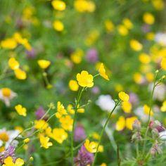 Three ways to create a mini-meadow