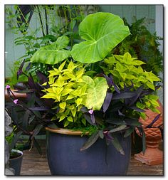 Container Drainage Myth -- Doing away with this old method of container gardening will help your planted treasures thrive.