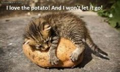 in love with potato
